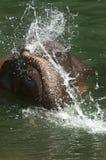 Baden des Elefanten Lizenzfreies Stockbild