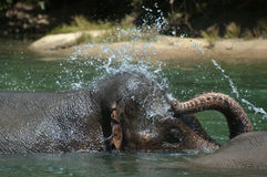 Baden des Elefanten Stockfotos