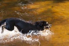 Baden des Hundes Lizenzfreies Stockfoto