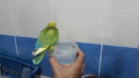 Baden des Vogels stock video
