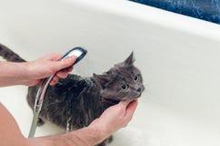 Baden einer grauen Katze im Badezimmer stockfoto