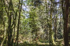 Baden Powell Trail nahe Steinbruch-Felsen in Nord-Vancouver BC Cana stockbild