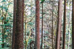 Baden Powell Trail perto da rocha da pedreira em Vancôver norte, BC, Cana Foto de Stock