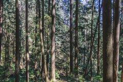 Baden Powell Trail près de roche de carrière à Vancouver du nord, AVANT JÉSUS CHRIST, Cana photographie stock