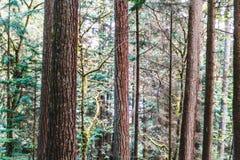 Baden Powell Trail près de roche de carrière à Vancouver du nord, AVANT JÉSUS CHRIST, Cana Photo stock
