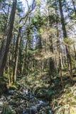 Baden Powell Trail vicino alla roccia della cava a Vancouver del nord, BC, Cana fotografie stock libere da diritti