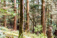 Baden Powell Trail vicino alla roccia della cava a Vancouver del nord, BC, Cana fotografia stock libera da diritti