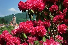 Baden-Baden Rhododendron Stiftskirche church Spring Royalty Free Stock Images