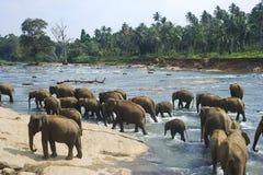Badende Elefanten Lizenzfreies Stockfoto