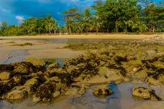 Badeortstrand mit Palmen im tropischen Asien lizenzfreies stockbild