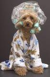 Badezimmer-Hund Stockbild