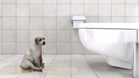 Badezimmer mit Hund Lizenzfreies Stockfoto