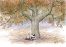 Badger in autumn forest Stock Image