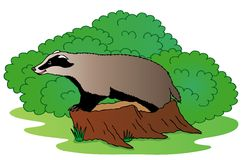 Badger beside bush Stock Photos