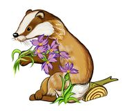 Badger gives violet forest flowers, watercolor illustration royalty free stock photography