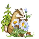 Badger gives white forest flowers, watercolor illustration royalty free stock image