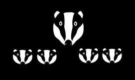 Badger mum and four cubs Stock Photos
