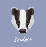 Badger Portrait. Vector Illustrated Royalty Free Stock Images