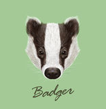 Badger Portrait. Vector Illustrated Royalty Free Stock Photo