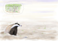 Badger thinking about the forest cleared Royalty Free Stock Photography