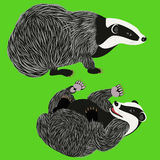 Badgers. Royalty Free Stock Photos