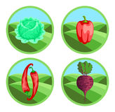 Badges of vegetables Royalty Free Stock Photography