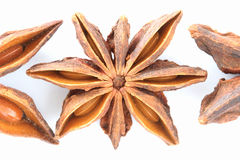 Badian - chinese anise - close up Royalty Free Stock Photography