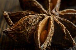 Badian close up. Brown badian close up on dark background royalty free stock photography