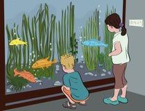 Badine l'aquarium de observation au musée Photos stock
