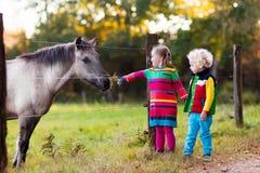 Badine le cheval de alimentation à une ferme Image stock