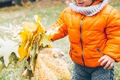 Badinez dans des feuilles de jaune de prise dans des ses mains photos stock