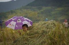 Badinez jouer sur le champ à la saison de récolte Photographie stock