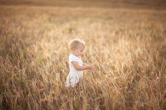Badinez l'enfant en bas âge sur le champ de blé au coucher du soleil, mode de vie Images stock