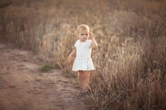 Badinez l'enfant en bas âge sur le champ de blé au coucher du soleil, mode de vie Photos stock