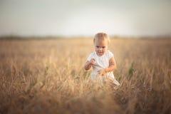 Badinez l'enfant en bas âge sur le champ de blé au coucher du soleil, mode de vie Photo libre de droits