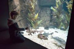 Badinez observer le banc de la natation de poissons dans l'oceanarium photo libre de droits
