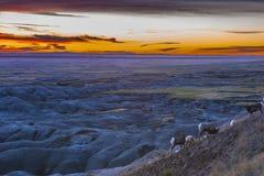 Badlands Bighorn στοκ φωτογραφία με δικαίωμα ελεύθερης χρήσης