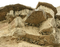 Badlands Bird Nests Stock Image