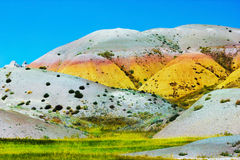 Badlands Blooming with Color Stock Photography