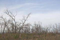Badlands in Istria. Bushes on barren karst soil royalty free stock images