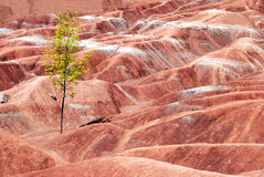 Badlands with a lone tree Royalty Free Stock Photo