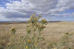 Badlands national park. Stock Photo