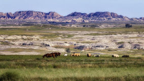Badlands Pasture. Horses graze in a pasture with the South Dakota Badlands in the background Stock Photos