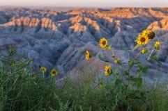 Badlands South Dakota på soluppgång royaltyfri bild