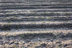 Badly plowed arable land. Furrows of plowed agricultural land, covered with a small dry crust before planting cereals Royalty Free Stock Photos