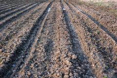 Badly plowed arable land. Furrows of plowed agricultural land, covered with a small dry crust before planting cereals Stock Photography