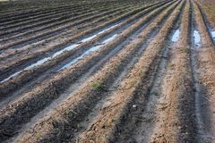 Badly plowed arable land. Furrows of plowed agricultural land, covered with a small dry crust before planting cereals Royalty Free Stock Photography