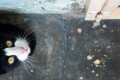 BaDman το γατάκι Στοκ Εικόνες