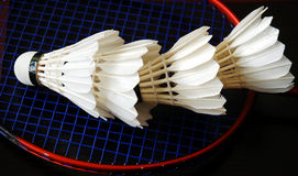 badminton Obrazy Royalty Free