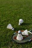 Badminton auf grünem Gras Stockfotos